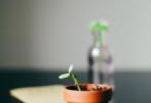 Picture of seedling